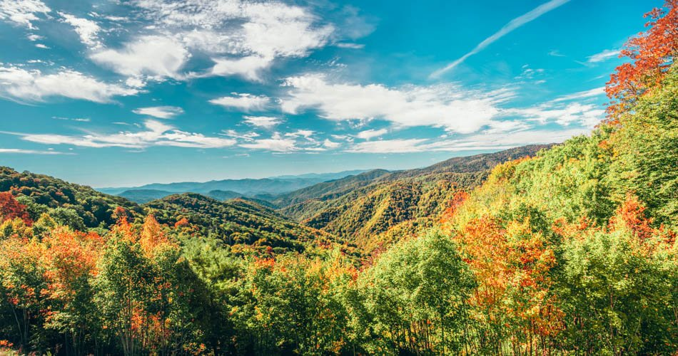 A scenic view of fall trees in Great Smoky Mountains National Park