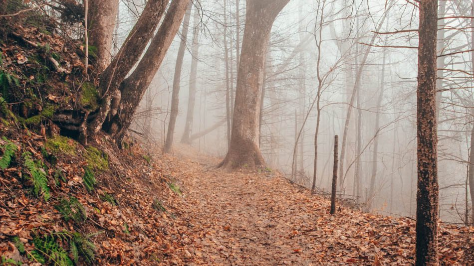 A foggy hike along Cucumber Branch Loop Trail in the fall in Great Smoky Mountains National Park